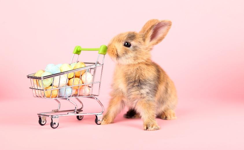 Pink Bunny 844x517